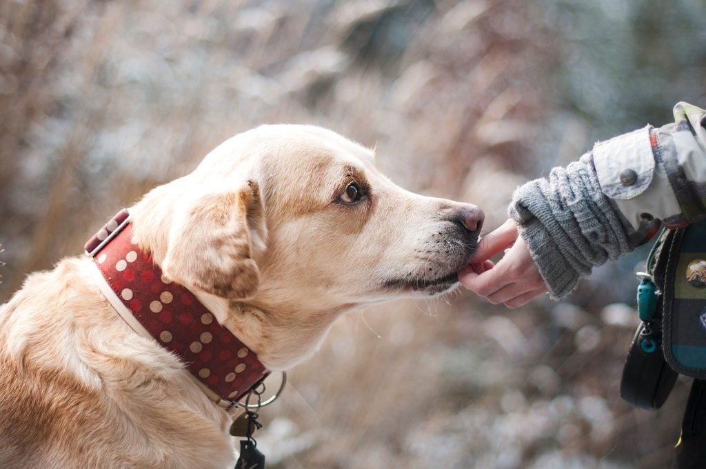 オーガニックドックフード 愛犬家に人気のおすすめ5選
